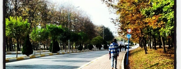 Sakarya University is one of A local's guide: 48 hours in Sakarya.