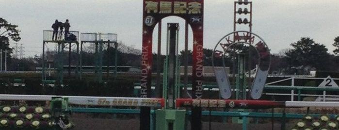 Nakayama Racecourse is one of 立ち寄り先.