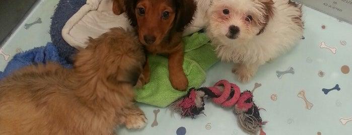 Charm City Puppies is one of Random.