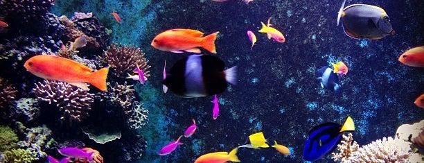 S.E.A. Aquarium is one of Singapore.