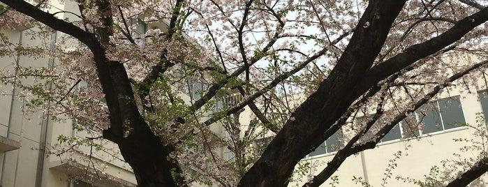 東京都立 千歳丘高等学校 is one of 都立学校.