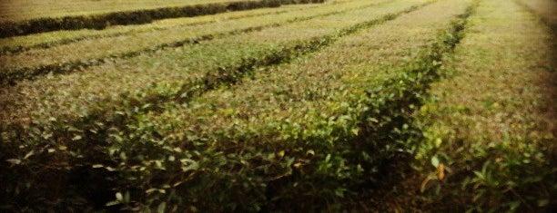Charleston Tea Plantation is one of Charleston, SC.