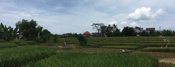 Rasio Coffee is one of Bali.