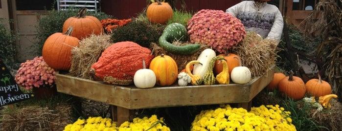 Abma's Farm Market & Nursery is one of NJ To Do.