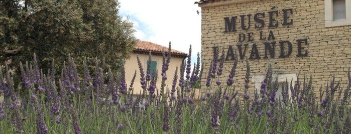 Musée de la Lavande is one of Trips / Vaucluse, France.
