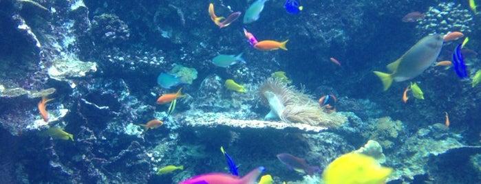 Georgia Aquarium is one of Atlanta At Its Best.