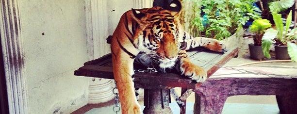 Phuket Zoo is one of Phuket.