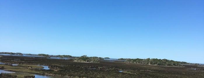 Withlacoochee Gulf Preserve is one of Spring Break 2012.