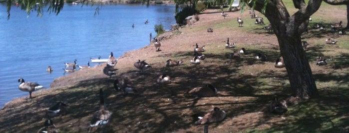 Shoreline Park & Lake is one of mtv.