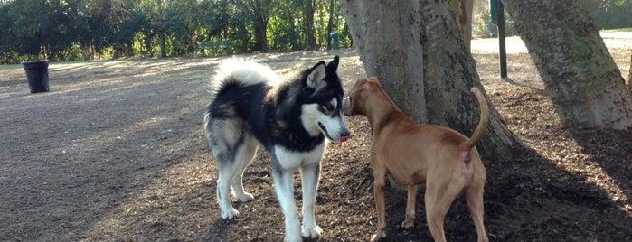 Hampton Park Dog Run is one of Charleston Lowcountry Dog Runs.