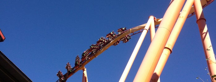 Tatsu is one of Six Flags Magic Mountain Roller Coasters.