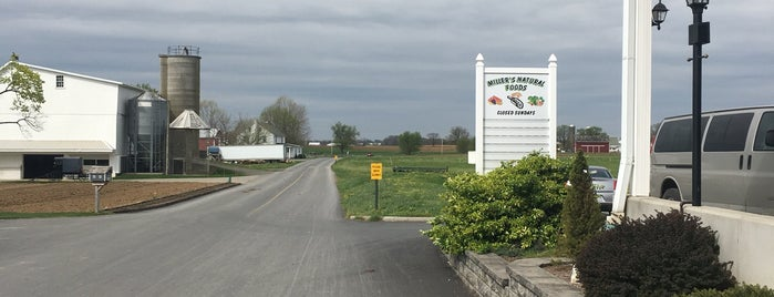 Millers Natural Foods Bird In Hand Pa is one of Farm Markets and Organic Food in Lancaster.