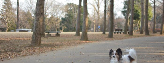 科学万博記念公園 is one of サイクリング.