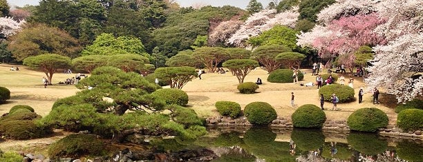 Shinjuku Gyoen is one of Travel.