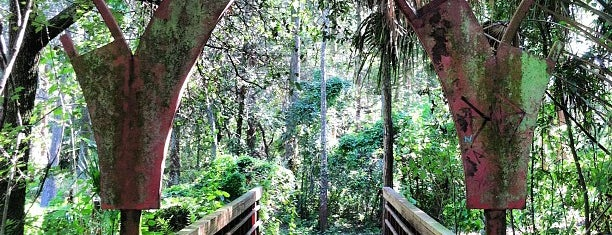 Al Lopez Park is one of Things to do in Tampa Bay.