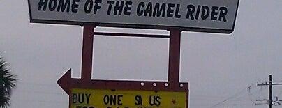 The Sheik is one of JAX , FL.