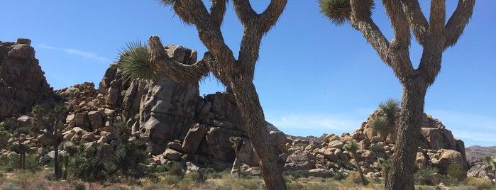 Joshua Tree, CA is one of road trip u.s.a..