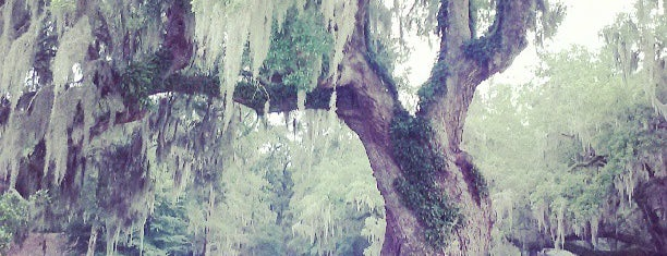 Middleton Place is one of Favorites in Charleston.