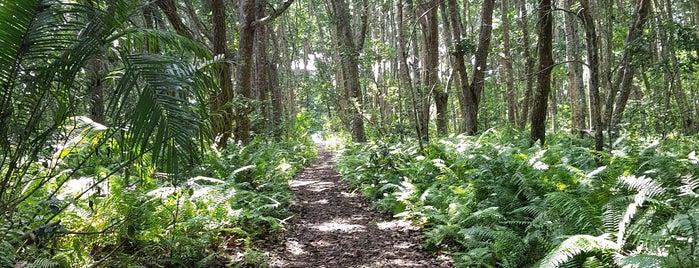 Jozani Forest is one of ZanziTrip.