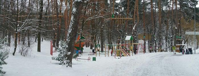Детская площадка под соснами в Голосеевском парке is one of Kyiv.