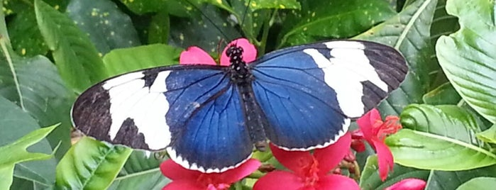 Key West Butterfly & Nature Conservatory is one of USA Key West.