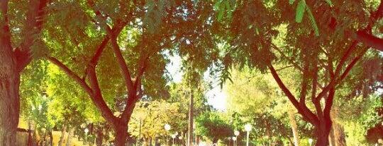 Jardines del Malecón is one of Murcia, que hermosa eres!.