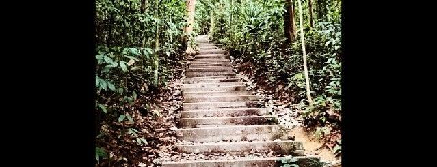 Bukit Timah Hiking Trails is one of Trek Across Singapore.