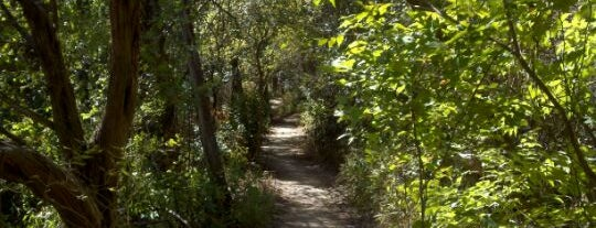 Barton Creek Greenbelt is one of Top 10 Running Trails in Austin, TX.