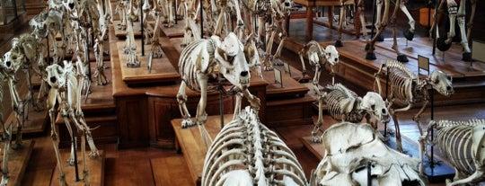 Galerie de Paléontologie et d'Anatomie comparée is one of To do in Paris.