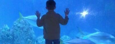 Downtown Aquarium is one of Denver's Best Entertainment - 2012.