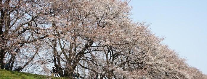 桂川、宇治川、木津川、三川合流地域 is one of 京都.