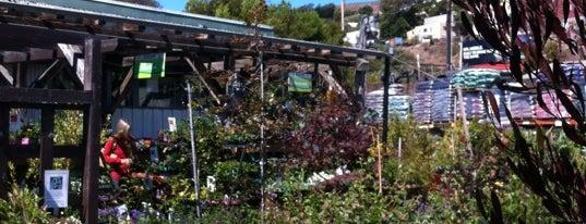 Flowercraft Garden Center is one of The 13 Best Flower Shops in San Francisco.