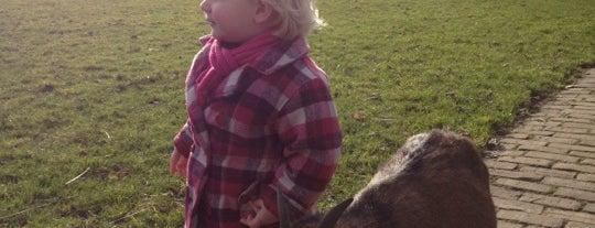 Kinderboerderij Elsenhove is one of Spelen!.