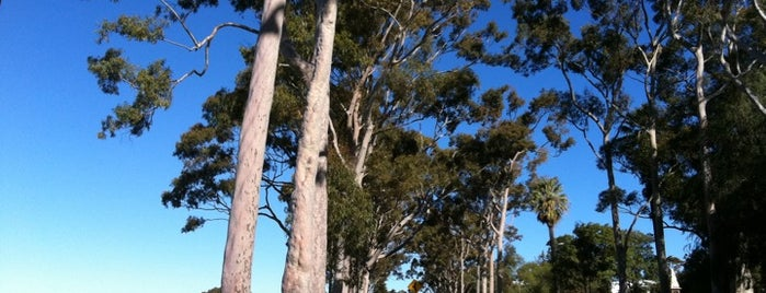 Kings Park and Botanic Garden is one of Explore Perth.