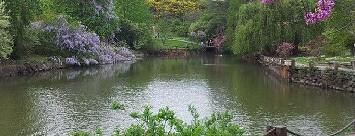 Atatürk Arboretumu is one of İstanbul Avrupa Yakası #4 🍁🍃.
