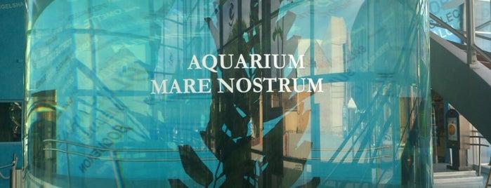 Aquarium Mare Nostrum is one of Montpellier.