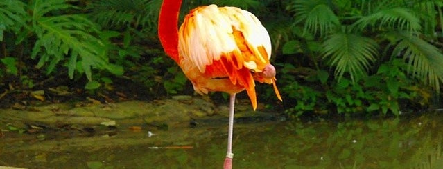 """""""Los Aluxes"""" Eco Park is one of Mexico // Cancun."""