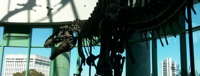 North Carolina Museum of Natural Sciences is one of Raleigh Favorites.