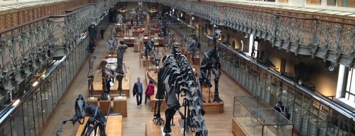 Grande Galerie de l'Évolution is one of Curious cabinets.