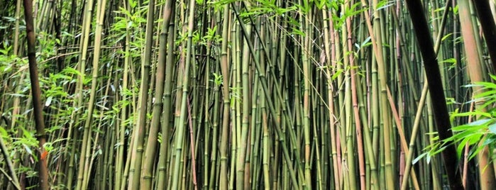 Bamboo Forest is one of Maui.