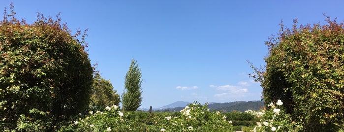 Kelham Vineyards is one of Napa.