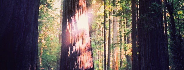 Humboldt Redwoods State Park is one of Beyond the Peninsula.