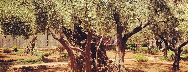 Garden of Gethsemane is one of Israel.