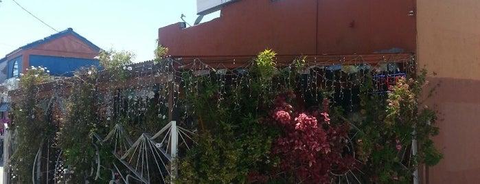 Tara's Himalayan Cuisine is one of Top 50 restaurants in LA.