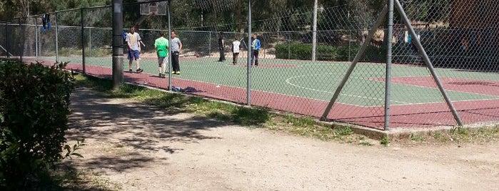 Kaisariani Municipal Park is one of children friendly.