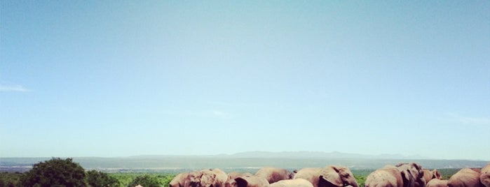 Addo Elephant National Park is one of South Africa.