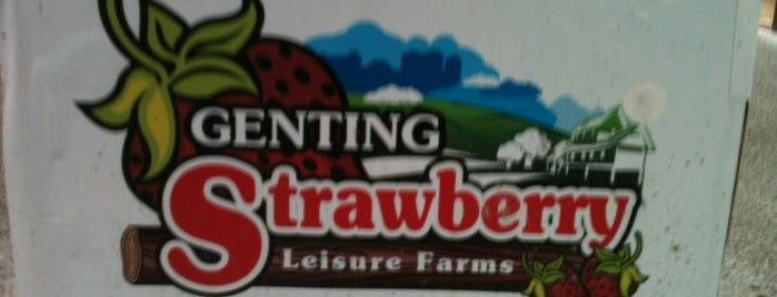Genting Strawberry Leisure Farm is one of @Bentong, Pahang.