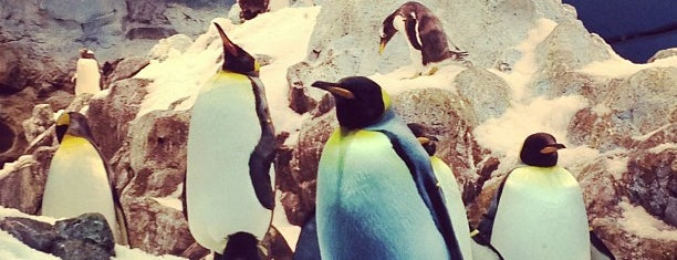 Loro Parque - Planet Penguin is one of Islas Canarias: Tenerife.