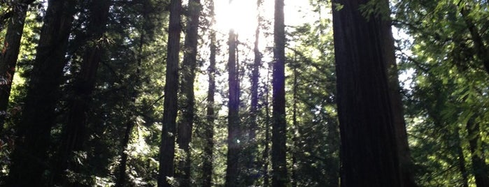 Armstrong Redwoods State Natural Reserve is one of Napa.