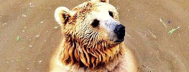 Bursa Hayvanat Bahçesi is one of Mutlaka gidilmeli!.